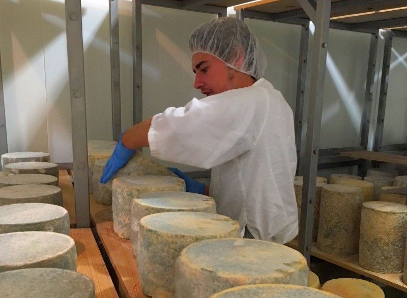 Dylan Wort '20 turning cheese at P.A.Bowen Farmstead in southern Prince George's County, Maryland